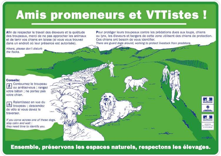 Patou-Chiens protection-claree
